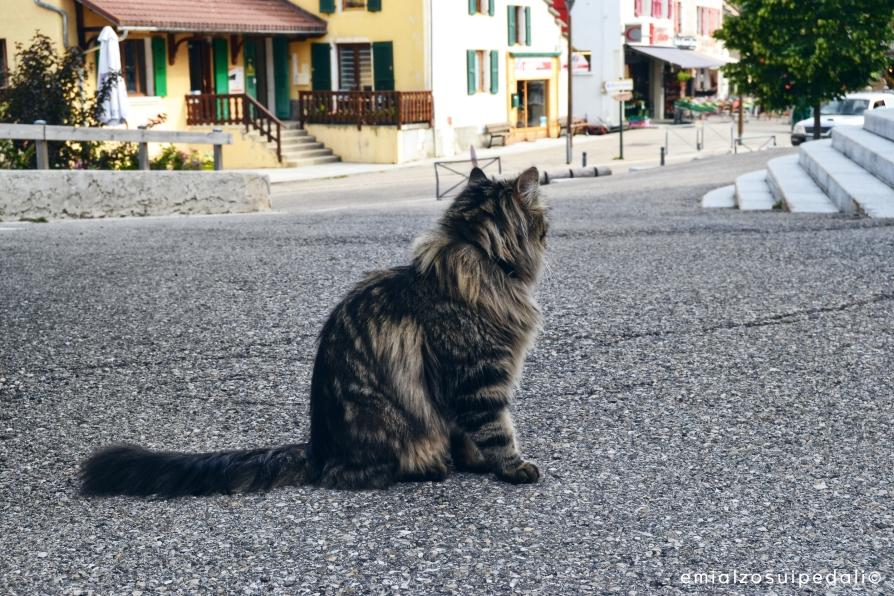 autrans gatto